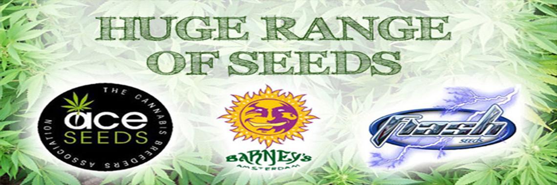 Legal High Cannabis Seeds